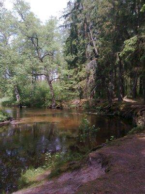 https://m.powiatszczycienski.pl/2016/08/orig/szlak-rzeki-saska-sawica-6750.png