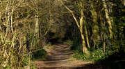 Leśne ścieżki przyrodniczo - dydaktyczne