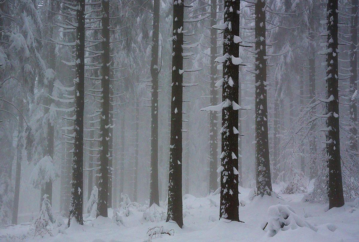 https://m.powiatszczycienski.pl/2021/01/orig/las-w-poblizu-miejscowosci-piasutno-harakterystyczne-kiscie-ze-sniegu-na-drzewach-poranek-37267.jpg
