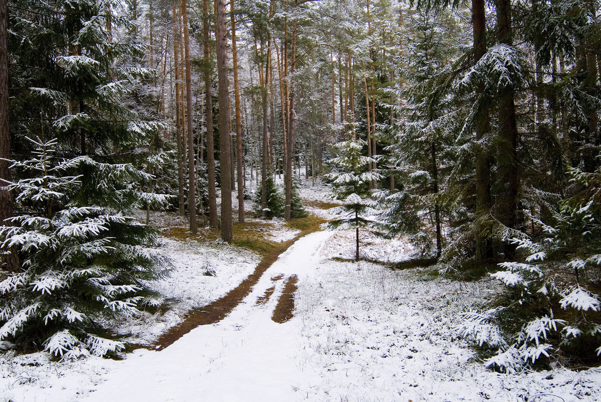 https://m.powiatszczycienski.pl/2021/01/orig/w-rejonie-jeleniowa-okolice-jeziora-ratajki-bardzo-ciekawe-miejsca-z-jeziora-wplywa-tak-zwana-leniwa-struzka-ktora-nastepnie-laczy-sie-z-moja-ulubiona-babancka-struga-37269.jpg