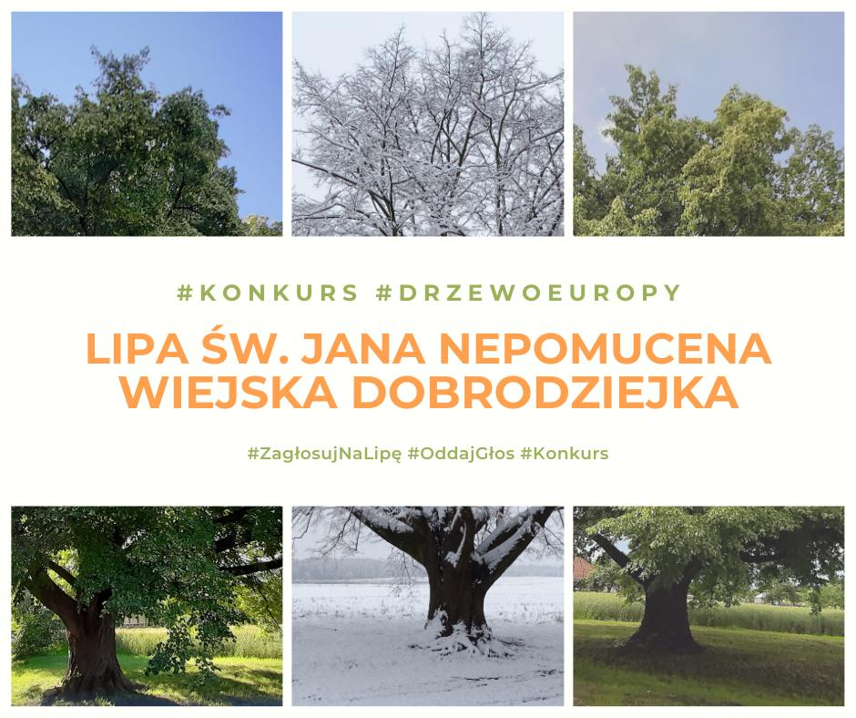 https://m.powiatszczycienski.pl/2021/02/orig/lipa1-38080.png