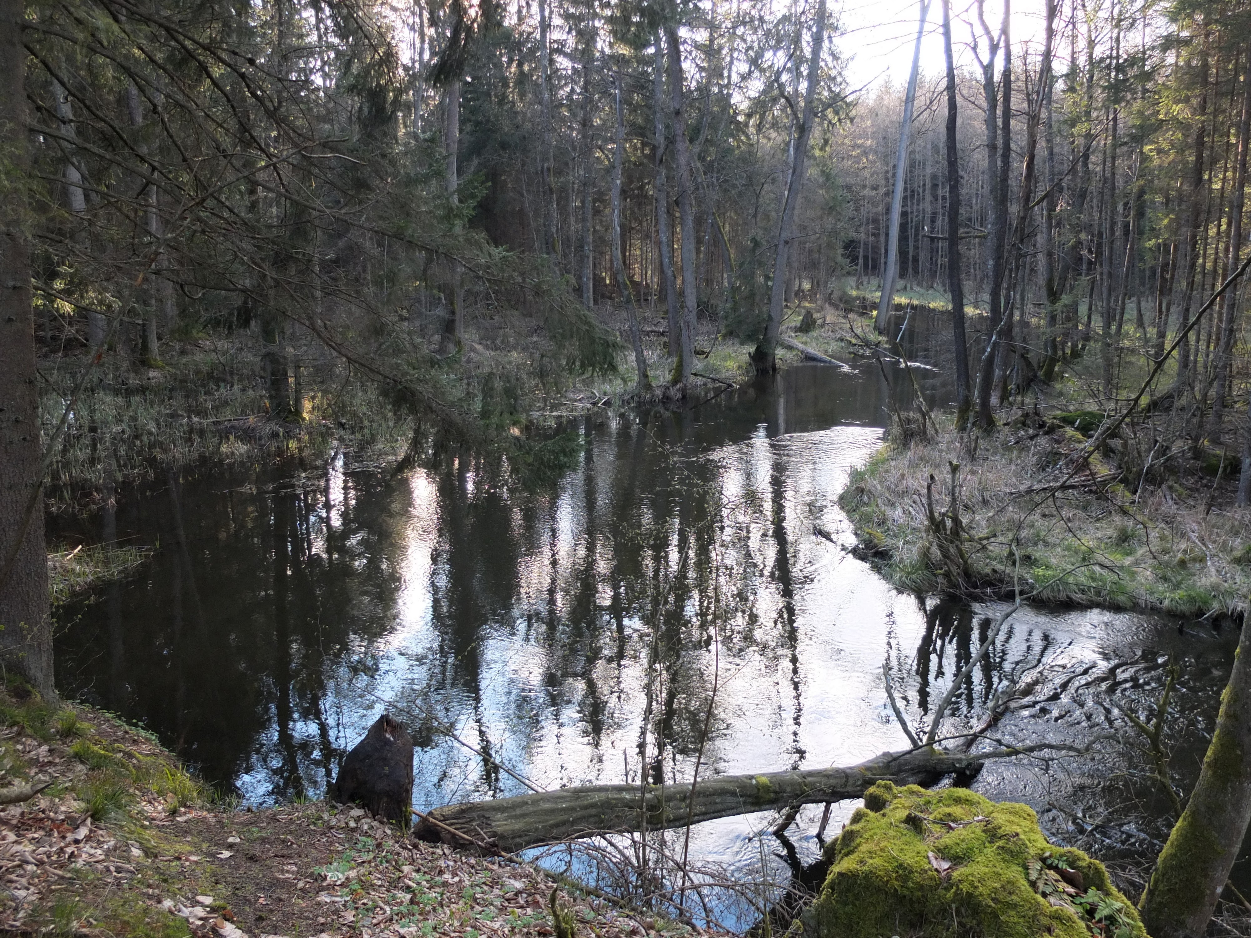 https://m.powiatszczycienski.pl/2021/04/orig/gmina-szczytno-grodzisko-w-janowie-fot-witold-olbrys-dla-przemka-zrobic-czarnobiale-39857.jpg