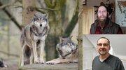 Przyroda Powiatu Szczycieńskiego, czyli kilka słów o wilkach